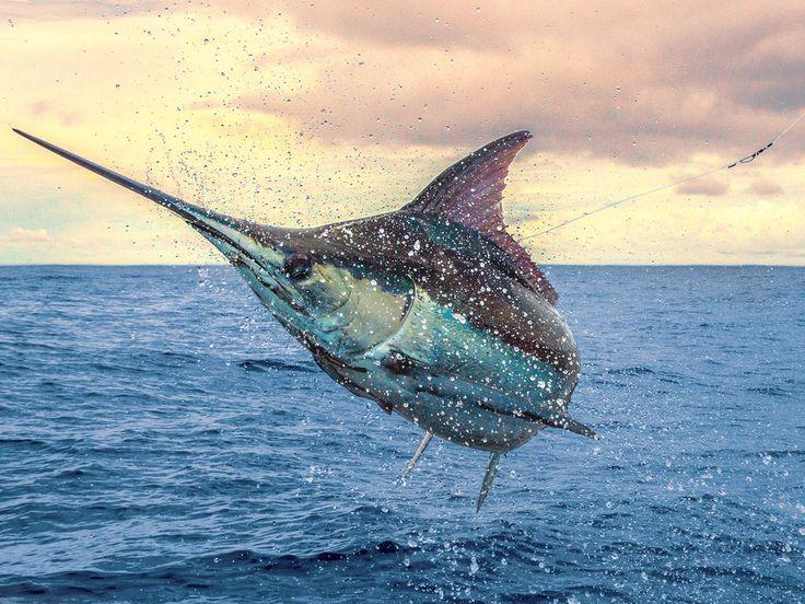 Blue Marlin Photo Magic