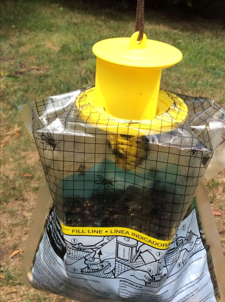 Works very good the best fly trap.