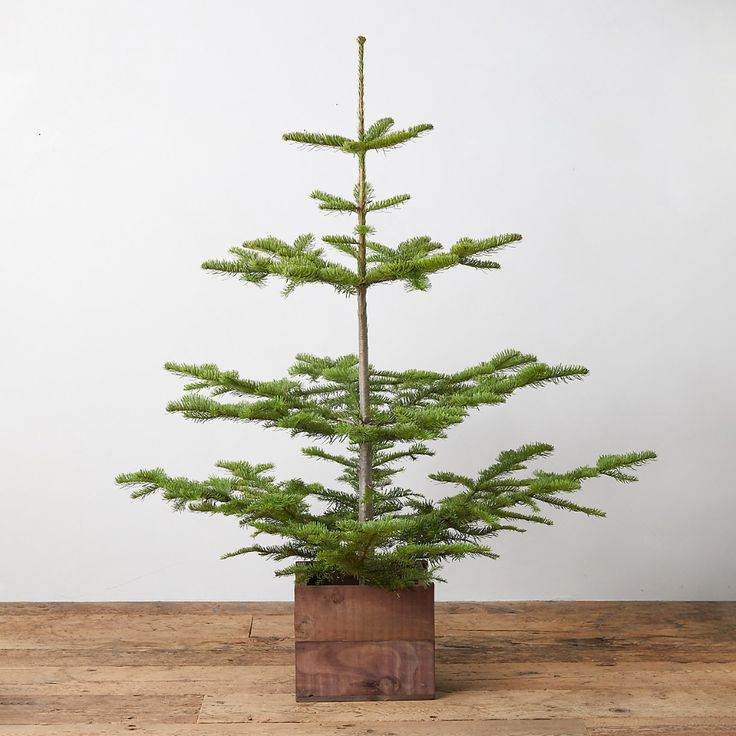 Fresh Tabletop Natural Noble Fir