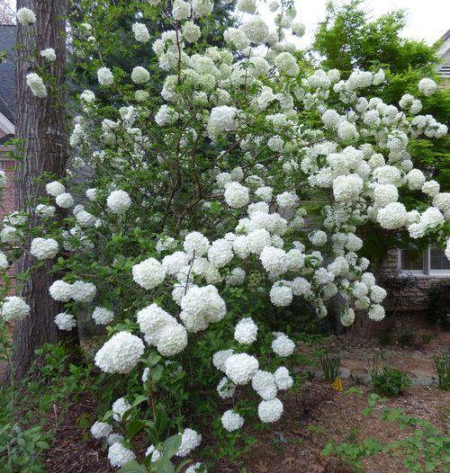 17 best Garden - evergreens - front garden images on ...