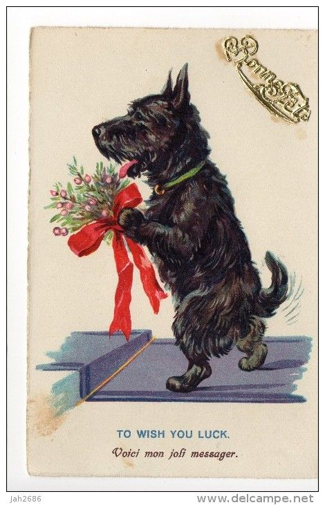 scottish terrier - Delcampe.net