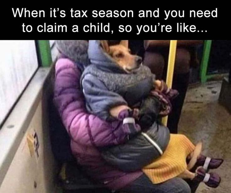 Funny Pictures Of The Day – 34 Pics. Lol or the maximum dependents because obamacare still getting u