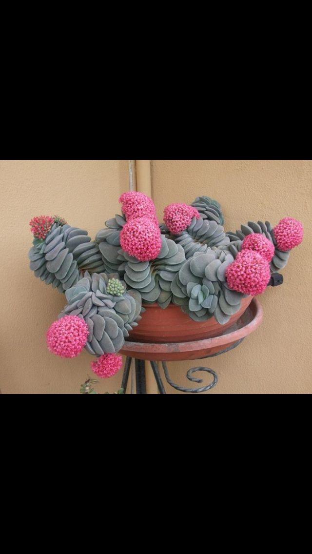 Flowering succulent planter. Great shapes!