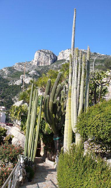 Jardin exotique monaco ville monaco monaco pinterest for Jardin exotique monaco