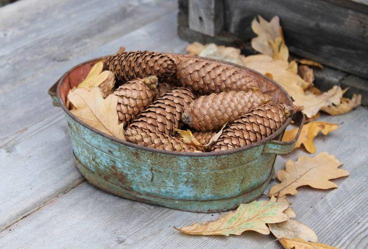 Kottar och löv. Foto: Erika Åberg