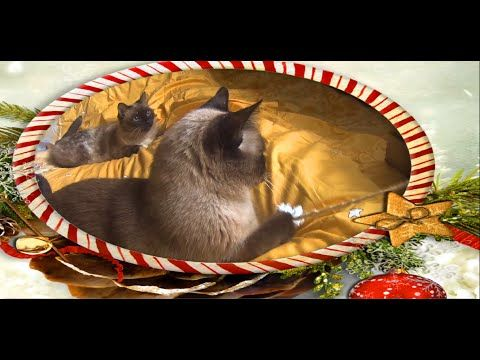 Fun with my cats on Christmas - YouTube