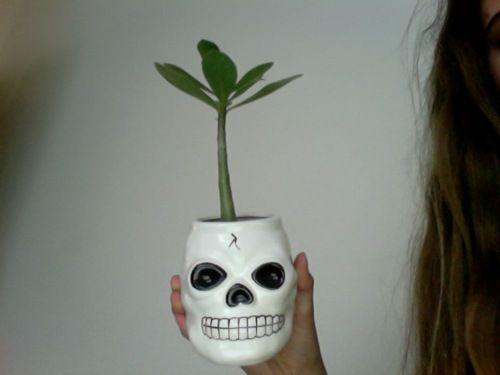11 best ideas about Sugar Skull on Pinterest   Terracotta ...