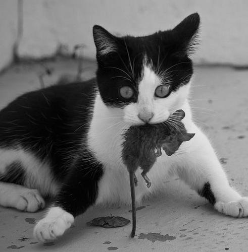 К чему снится белая мышь? ЭТО ХОРОШО! Приснилась белая мышь во сне, что это значит?