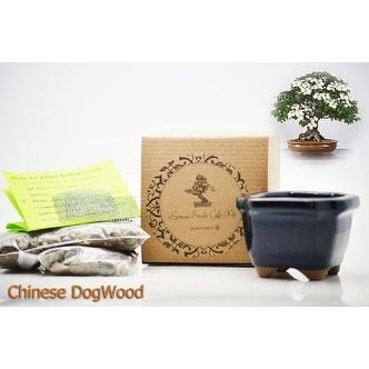 9GreenBox - Bonsai Seed Kit - Chinese Dogwood, Green, Gardening
