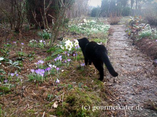 Katze Morle #cat #katze #garden #garten #nature