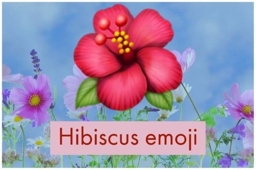 Hibiscus emoji meaning is regarded as the expression of love