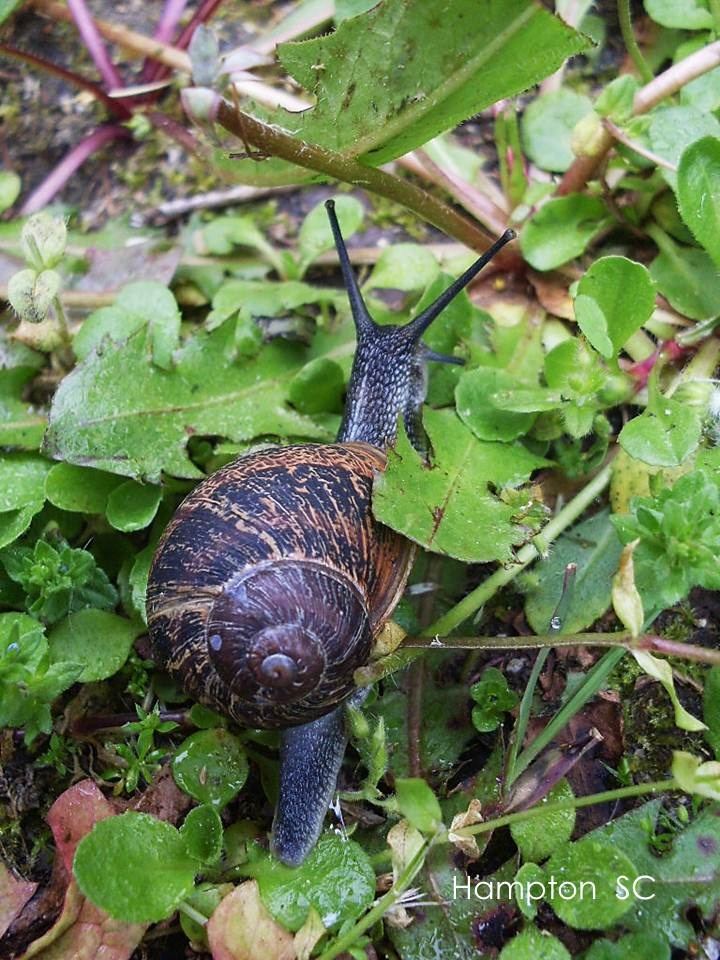 how to find snails in winter