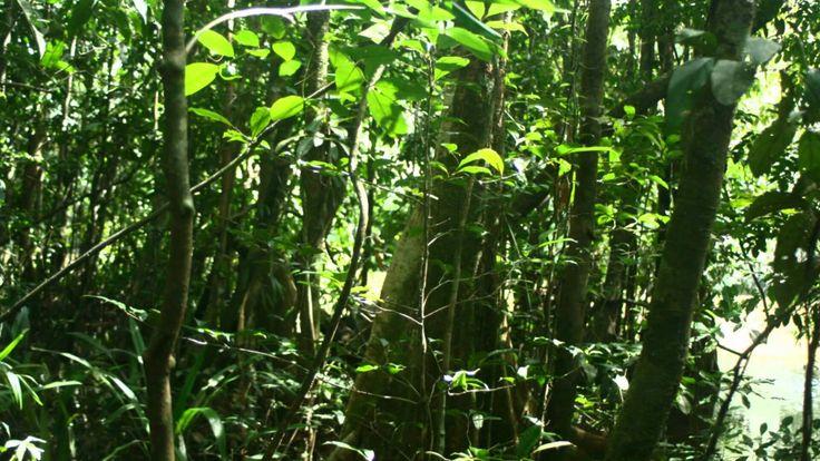 12 best selva tropical Per images on Pinterest Jungles Tropical