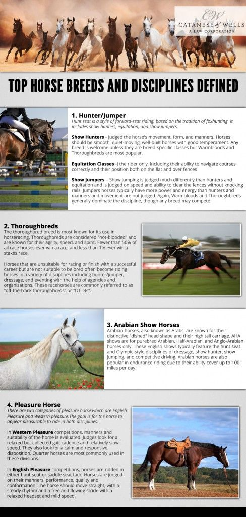Best Horse Stuff Images On   Horse Horse Stalls And