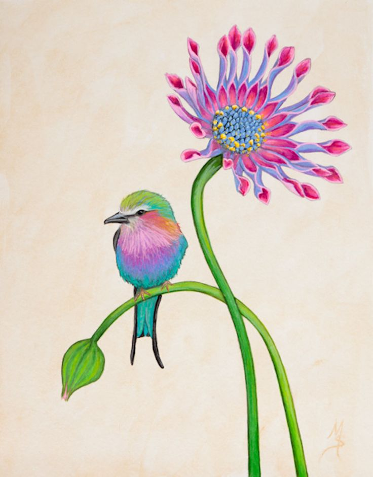 Bird Art Botanical Print Lilac Breasted Roller Bird by SummerHour, would make a beautiful tattoo