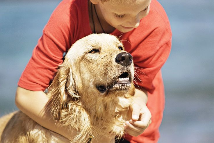 Dogs make wonderful companions and need to be treated with care and respect. Most dogs are very friendly and won't bite. However, some dogs bite because t