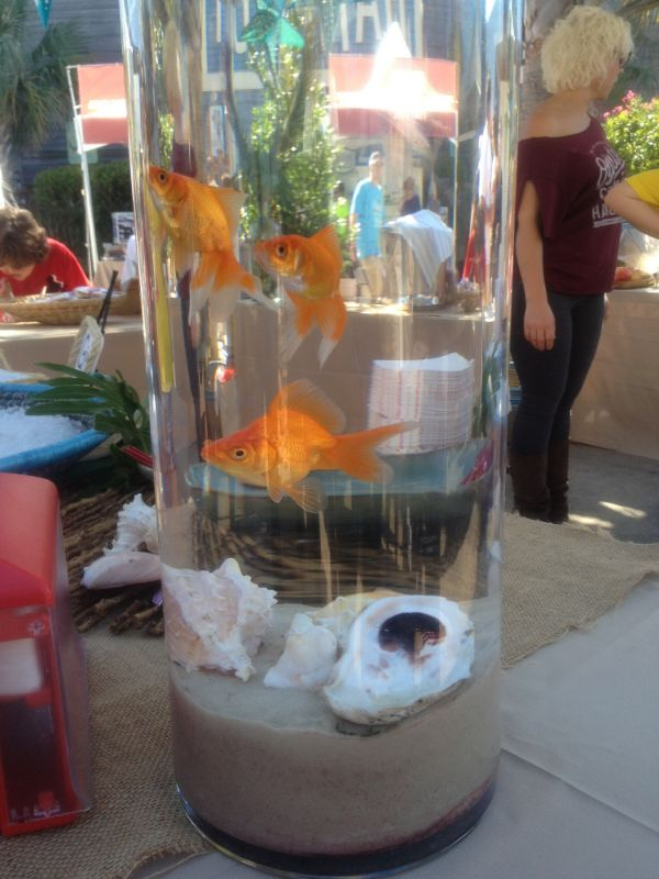 Ideas about goldfish centerpiece on pinterest fish