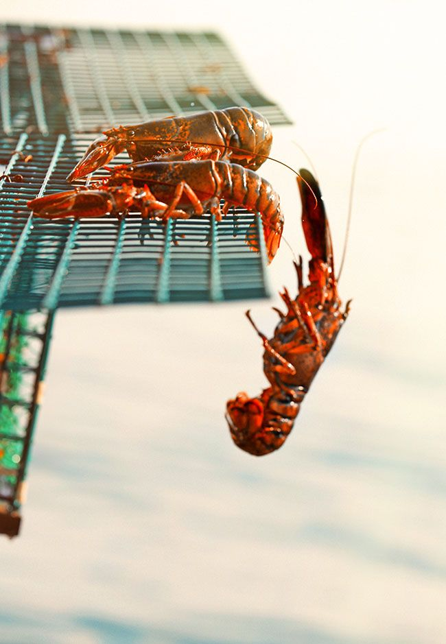 Catch, cook and eat lobsters in Portland.