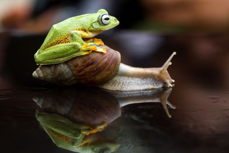Per Anhalter durch die Tierwelt