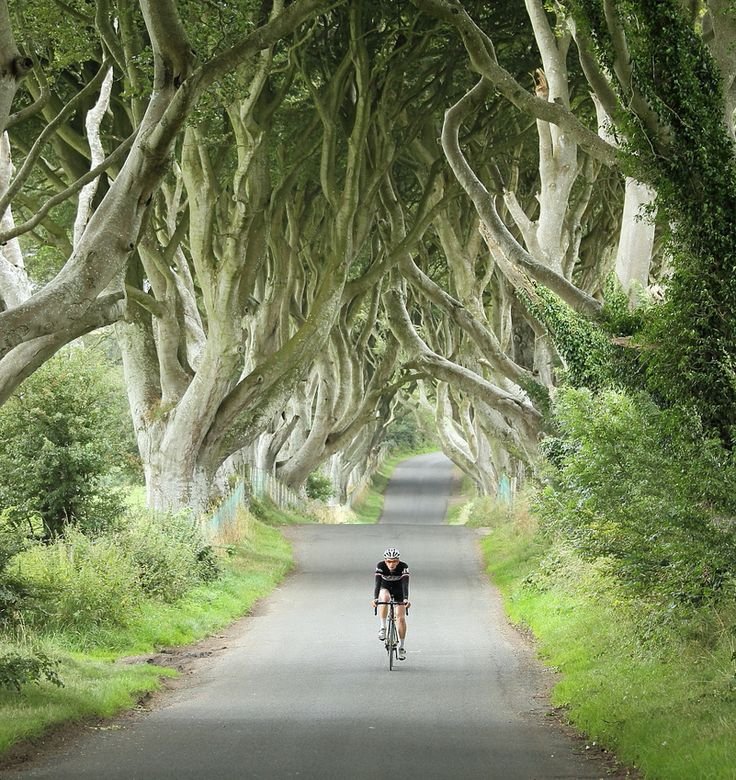 The Dark Hedges, #Irlanda del Nord: sulla via di Game of Thrones | Viaggio nel Mondo