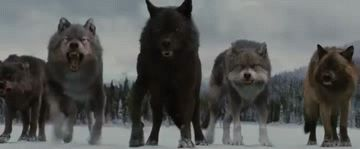"Werewolf Twilight GIF  ""Twilight has some of the Cutest Werewolves"""