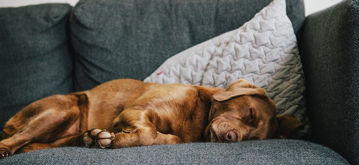 ber ideen zu wilde katzen auf pinterest. Black Bedroom Furniture Sets. Home Design Ideas