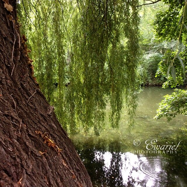 🌱 🌿#EwarielPhotography #nature #forest #leaf #plant #plants #green #leaf #leafs #nature #natural #sauterelle #beautiful #pretty #beauty #planta #plantas #green  #elvish #fae #faerie #fairy #woodland #forest