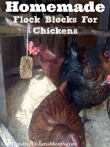 DIY Homemade Flock Blocks For Chickens #Chickens
