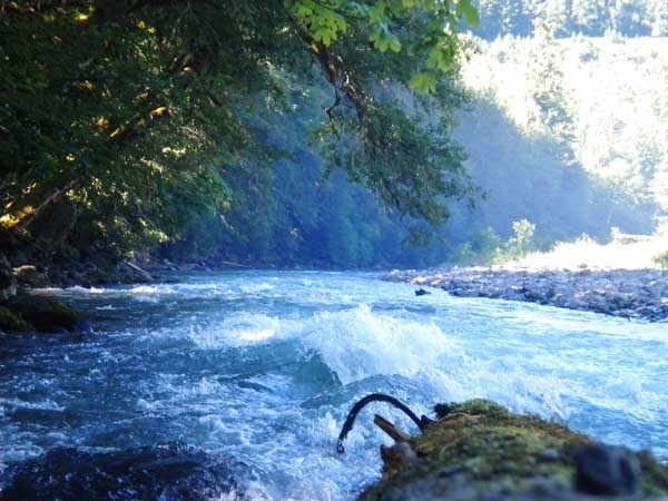 Gifford Pinchot National Forest Historical | Camping in Iron Creek, Gifford Pinchot National Forest, WA-Fun Places ...