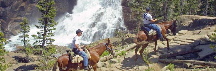 Mule & Horseback Rides. Definitely doing this when we go to Yosemite!