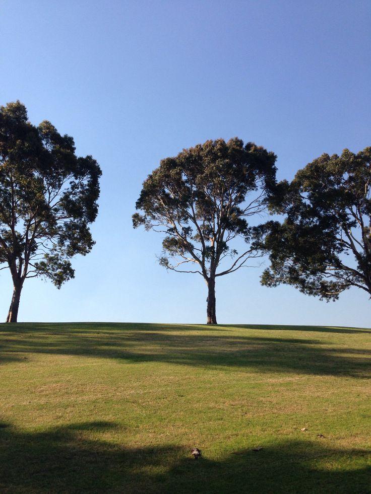 Maylands park