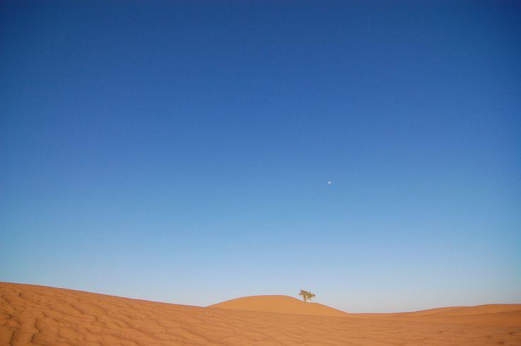 #maroko, #podroze,  #afryka, #podrozepomaroku, #trave, #morocco, #desert, #pustynia