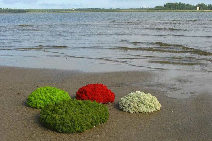 Moss Island, different colors - Floemasrl.it