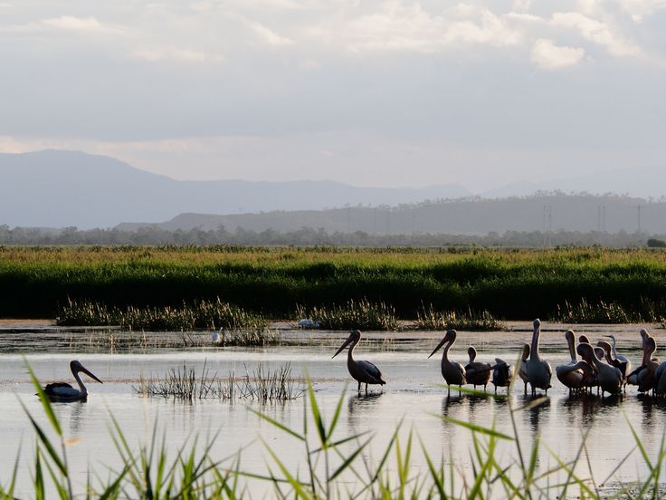 L1M1AS3 - Landscape - f/20, 1/320s, ISO-800.  Townsville Common Wetlands, QLD