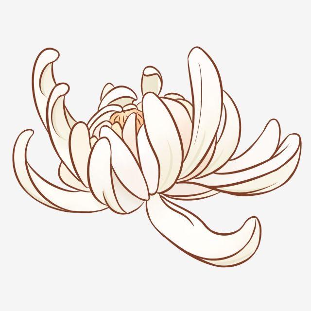 手繪菊花 秋季白菊 卡通白菊花 植物花卉 Png和psd圖片素材 White Chrysanthemum Chrysanthemum Flowers