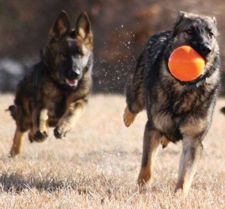 Mountain Dog Photo Contest Winners// 1st Place: OUTLAW AND MUSKET