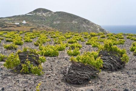 Visit Greece | Greek sweet wines