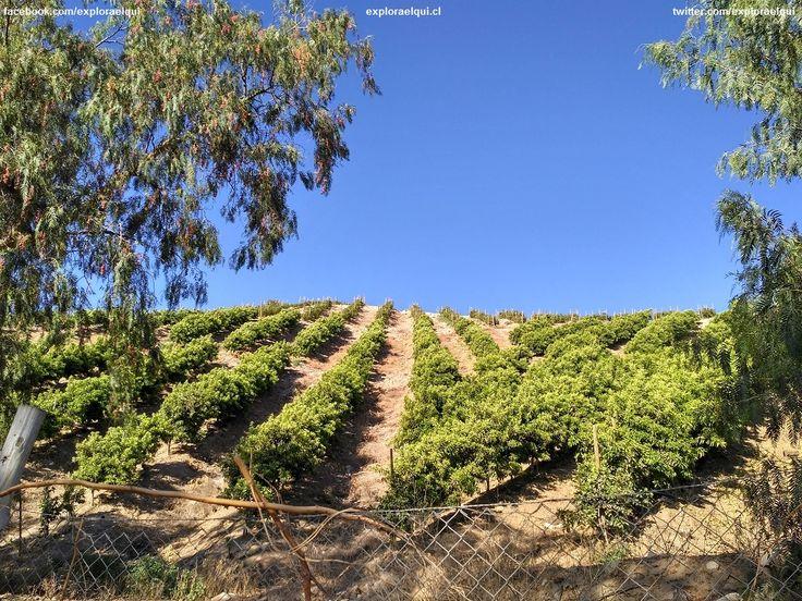 El #ValleDelElqui, valle de contrastes, su hermoso cielo azul, el verde de sus cultivos, los tonos café de sus áridos cerros.