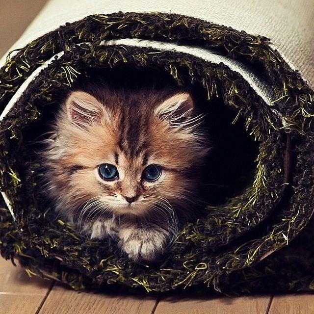 cat: Cats Cats, Cute Cats, Cats Kitty, Catscatscats 3, Baby Animals, Feline Pets, Cats Kittens, Cats Feline