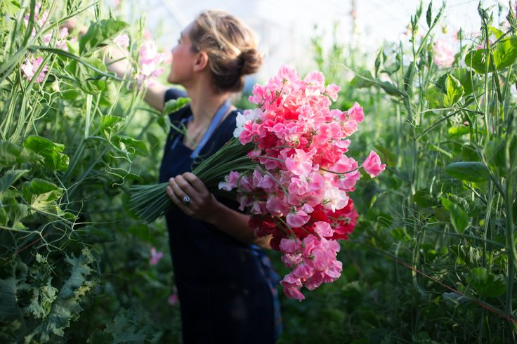 Floret_How To Grow Sweet Peas-1