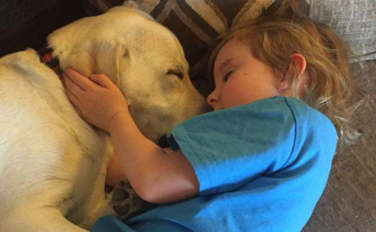 Hero Labrador Rescues Little Girl From Choking To Death During A Seizure