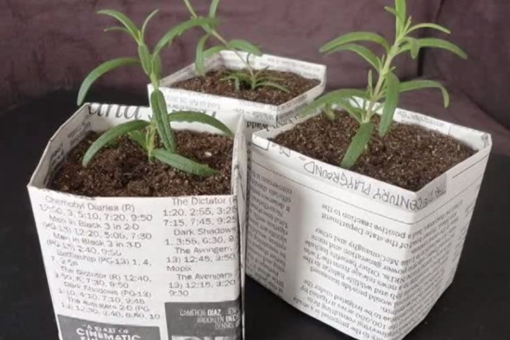 We've made newspaper pots for a few years now, and honestly we love them. They're cheap, hold up well enough and when it's time to put your seeds in the ground, you can just plant them directly into your beds. The newspaper composts into the soil!