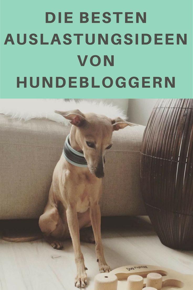 Die besten Ideen für die Auslastung von Deinem Hund von Hundebloggern.