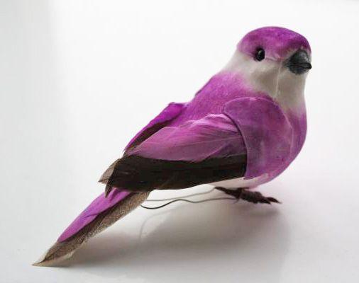 paarse vogel - Google Search