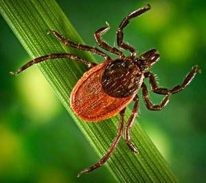 7. I am afraid of Deer Ticks. I have Chronic Lyme Disease which has hijacked my life for the past 5 years.