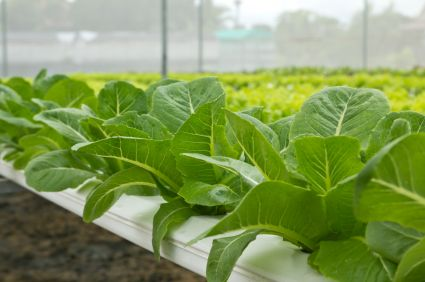 Hydroponics Basics - Water-based Systems