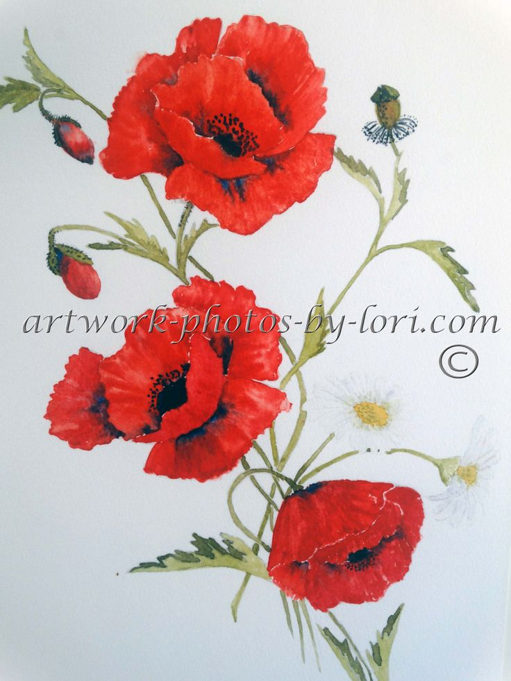 print of original painting of poppy's in watercolour