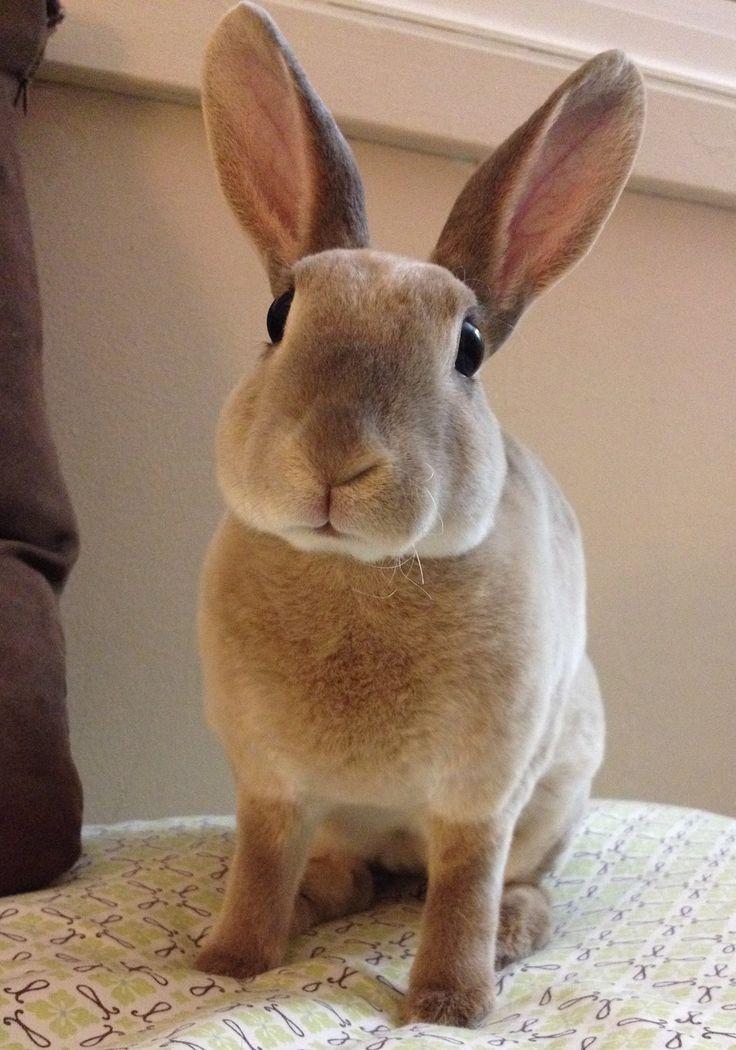 My Mini Rex rabbit Nibbles http://ift.tt/2ifNb5w