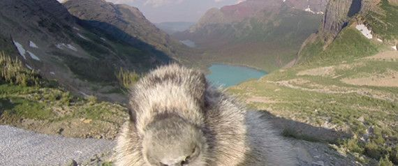 Marmot Licks GoPro Camera; We Instantly Fall In Love