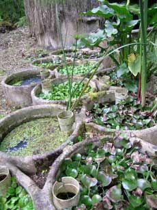 """Tratamiento de aguas grises (jabonosas) en la """"Aldea"""" de Las Cañadas. Huatusco, Veracruz. Mexico. - La Aldea ecológica cuenta con tres microsistemas de tratamiento de aguas grises, para devolverla  al arroyo totalmente limpia (pantanos artificiales)"""